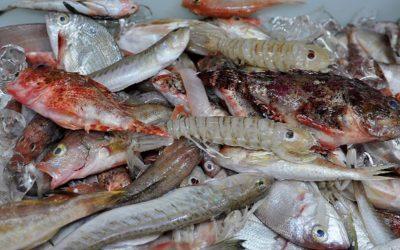 Caldos de pescado: confesión de pecados