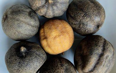 Limones secos